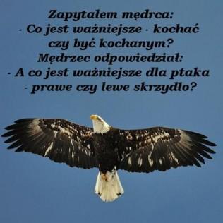 kocha-316x316